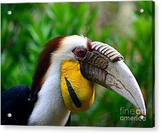 Acrylic Print featuring the photograph Wreathed Hornbill by Lisa L Silva