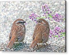 Wren Bird Sweethearts Acrylic Print by Jennie Marie Schell