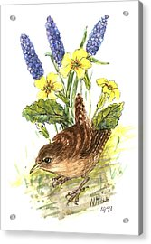 Wren In Primroses  Acrylic Print by Nell Hill