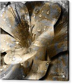 Wren Acrylic Print by Yanni Theodorou