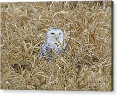 Acrylic Print featuring the photograph Wv Snowy by Randy Bodkins