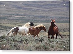 Wyoming Mustangs Acrylic Print