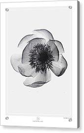 X-ray Flower Acrylic Print by Kenword Maah