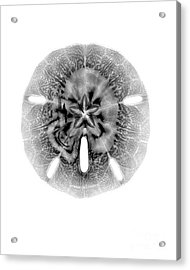 X-ray Of Sand Dollar Acrylic Print