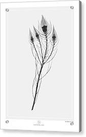 X-ray Plant Acrylic Print by Kenword Maah