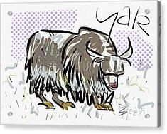 Yak Acrylic Print