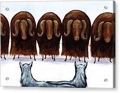 Yak Line Acrylic Print by Christy Beckwith