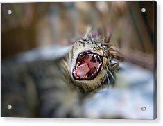 Yawn Acrylic Print