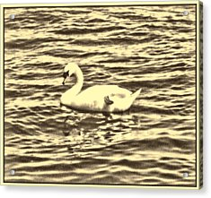 Acrylic Print featuring the photograph Ye Olde Swan by Shawn Dall