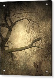Year Of The Rabbit Acrylic Print by Gothicrow Images