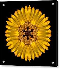 Yellow African Daisy Flower Mandala Acrylic Print