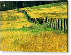 Yellow Afternoon Acrylic Print by Emanuel Tanjala