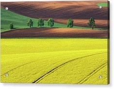 Yellow Acrylic Print by Ales Komovec