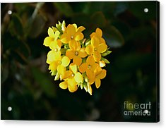 Acrylic Print featuring the photograph Yellow Allegria  by Ramona Matei