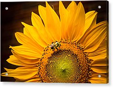 Acrylic Print featuring the photograph Yellow And Black by Sara Frank