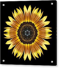 Yellow And Brown Sunflower Flower Mandala Acrylic Print