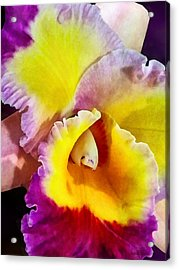 Yellow And Magenta Cattleya Orchid Acrylic Print by Susan Savad