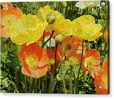 Yellow And Orange Poppies Acrylic Print by Dee Meyer