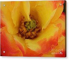 Yellow And Orange Rose Acrylic Print