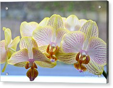 Yellow And Pink Orchids Acrylic Print