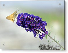 Yellow And Purple Acrylic Print by Kenny Francis
