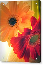 Yellow And Red Gerberas Acrylic Print