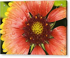 Yellow And Red Acrylic Print by Robert Culver