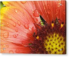Yellow And Red With Ant Acrylic Print by Robert Culver
