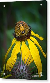 Yellow And Yellow Acrylic Print by Todd Bielby