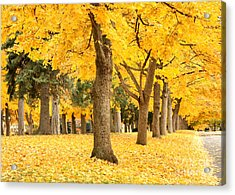Yellow Autumn Wonderland Acrylic Print by Carol Groenen
