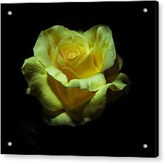 Yellow Beauty Acrylic Print by Cecil Fuselier