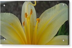Acrylic Print featuring the photograph Yellow Beauty by Tamara Bettencourt