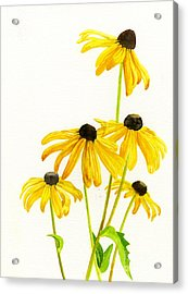 Yellow Black Eyed Susans Acrylic Print by Sharon Freeman