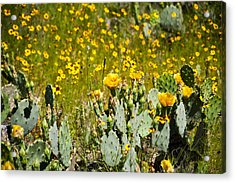 Yellow Blooms Acrylic Print by Mark Weaver