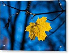 Yellow Blues - Featured 3 Acrylic Print by Alexander Senin