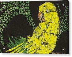 Yellow Budgie Acrylic Print