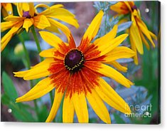 Acrylic Print featuring the photograph Yellow Burst by Allen Beatty