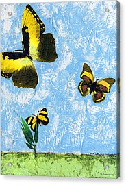 Yellow Butterflies - Spring Art By Sharon Cummings Acrylic Print by Sharon Cummings