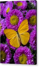 Yellow Butterfly And Pink Flowers Acrylic Print by Garry Gay