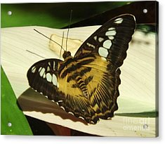 Yellow Butterfly Acrylic Print by Brigitte Emme