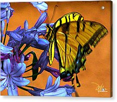 Yellow Butterfly On Agapanthus Acrylic Print