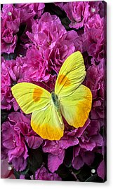 Yellow Butterfly On Pink Azalea Acrylic Print by Garry Gay