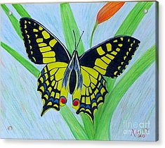 Yellow Butterfly Acrylic Print by Peggy Miller