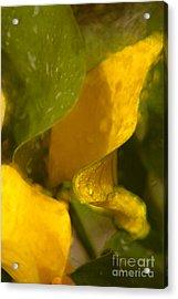 Yellow Cala Ruffles Acrylic Print by Jennifer Apffel