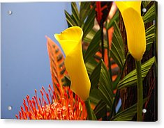 Acrylic Print featuring the photograph Yellow Calla Lilies by Jennifer Ancker