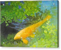 Yellow Carp In Green Acrylic Print by Robert Conway