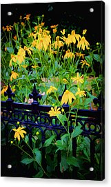 Yellow Coneflowers Echinacea Wrought Iron Gate Acrylic Print by Rich Franco