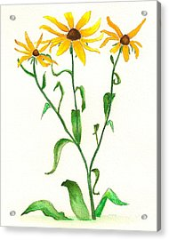 Acrylic Print featuring the painting Yellow Daisies by Nan Wright