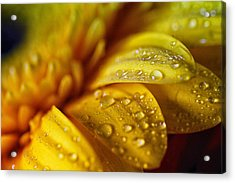 Yellow Daisy Drizzle Acrylic Print by Christy Patino