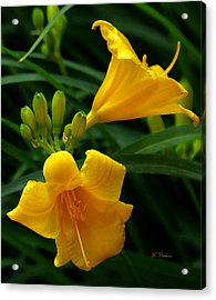 Acrylic Print featuring the photograph Yellow Daylilies by James C Thomas